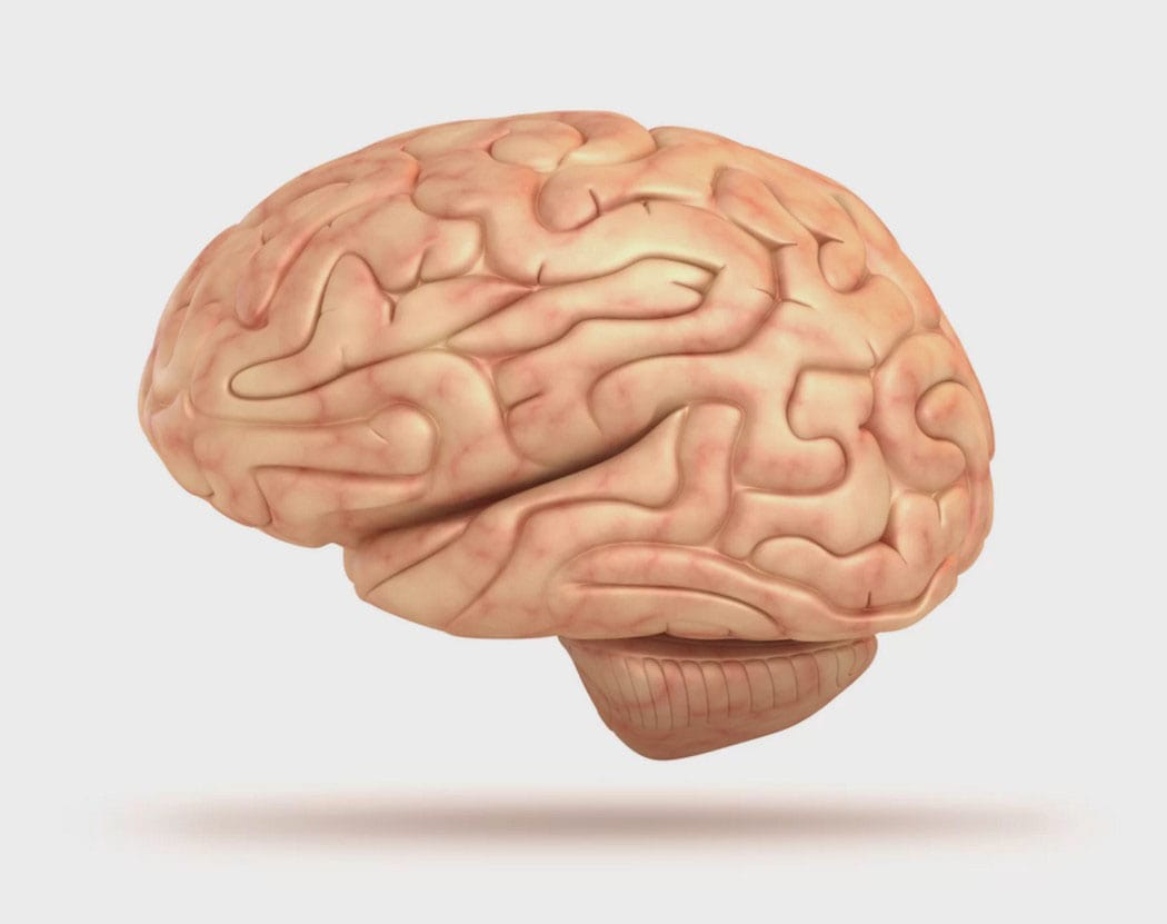 Our wonderful linear brain has been with us for the last 50,000 years