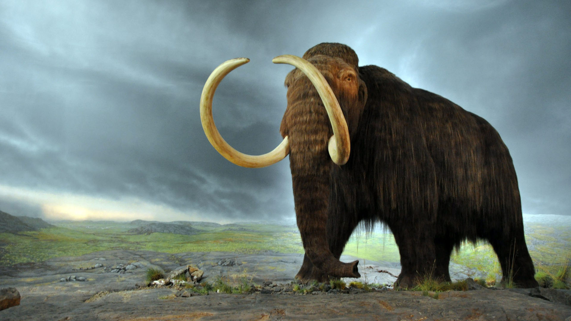 Most Mammoths Died Out at the End of the Last Ice Age